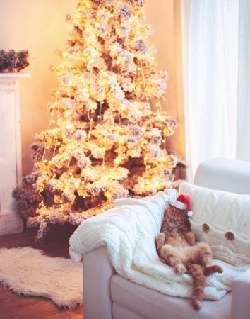 Foto de Lovable ginger cat wearing Santa Claus hat sleeping on chair near Christmas tree at home interior - Imagen libre de derechos