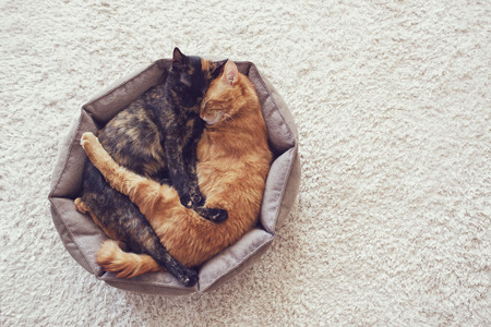 Photo pour Couple cats sleep and hugging in their soft cozy bed on a floor carpet - image libre de droit