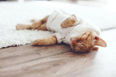 Foto de Cute little ginger kitten wearing warm knitted sweater is sleeping on the floor - Imagen libre de derechos