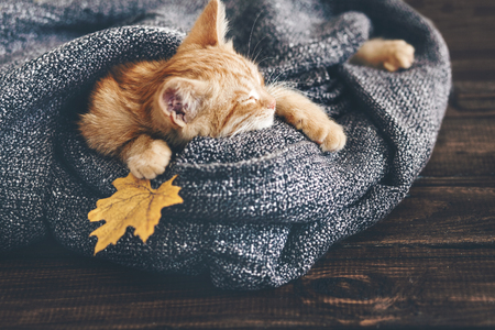Foto de Cute little ginger kitten is sleeping in soft blanket on wooden floor - Imagen libre de derechos
