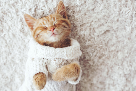 Cute little ginger kitten wearing warm knitted sweater is sleeping on the white carpet