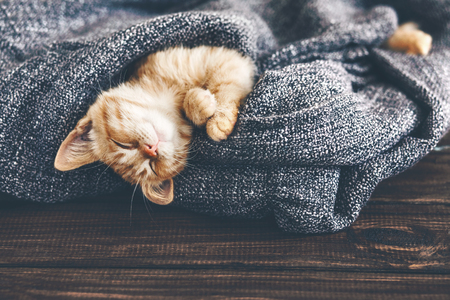 Photo for Cute little ginger kitten is sleeping in soft blanket on wooden floor - Royalty Free Image