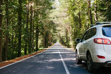 Photo pour Driving car on a forest asphalt road among trees - image libre de droit