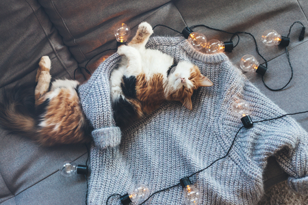 Photo for Lazy cat is sleeping on soft woolen sweater on sofa, decorated with led lights. Winter or autumn weekend concept, top view. - Royalty Free Image