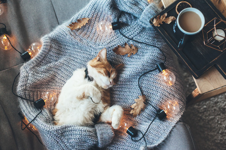 Photo pour Lazy cat is sleeping on soft woolen sweater on sofa, decorated with led lights. Winter or autumn weekend concept, top view. - image libre de droit