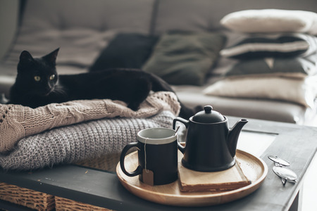 Photo pour Still life details in home interior of living room. Black cat relaxing on sweater. Cup of tea on a serving tray on coffee table. Breakfast over sofa in morning sunlight. Cozy autumn or winter concept. - image libre de droit