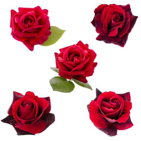 Photo for collage of five dark red roses - Royalty Free Image