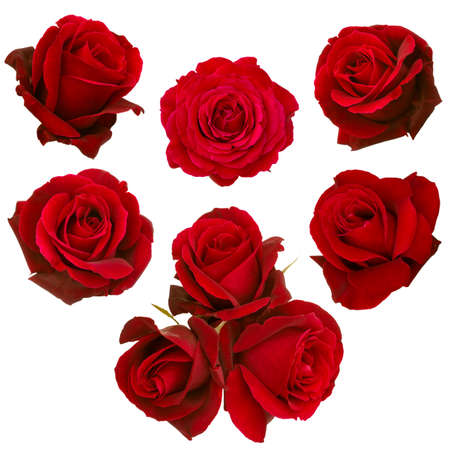 Photo pour collage of red roses isolated on white background - image libre de droit