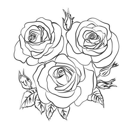 Illustration pour Rose sketch on white background - image libre de droit