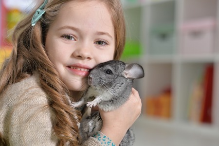 Photo for Portrait of a cute girl playing with chinchilla - Royalty Free Image