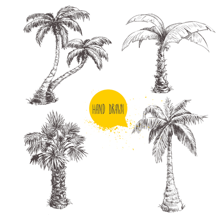 Illustration pour Hand drawn palm trees sketch set. - image libre de droit