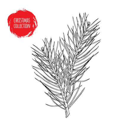 Illustration pour Hand drawn pine tree branches composition. Christmas and witner seasonal design element. Great for holiday decor, greetings. Vector illustration. - image libre de droit