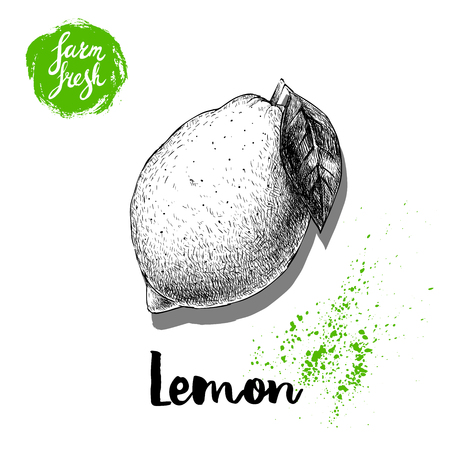 Ilustración de Hand drawn sketch lemon with leaf sticker poster. - Imagen libre de derechos