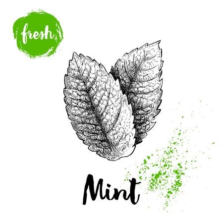 Ilustración de Hand drawn sketch style mint leaves. Healthy herb vector. Peppermint illustration isolated on white background. - Imagen libre de derechos