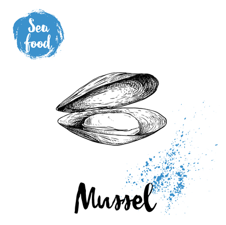 Illustration pour Hand drawn sketch style opened and boiled fresh mussel. Seafood vector illustration poster for fish markets and restaurants menu. - image libre de droit