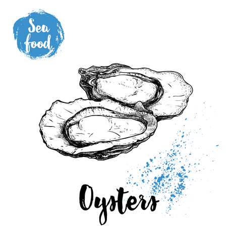 Illustration pour Hand drawn opened oyster, sketch style illustration. - image libre de droit