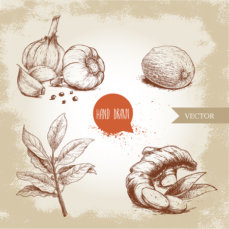 Ilustración de Hand drawn sketch spices set. Garlic composition with black pepper seeds, ginger root, bay leaves branch and nutmeg. Herbs, condiments and spices vector illustration isolated on old background. - Imagen libre de derechos