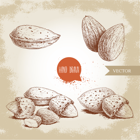 Illustration pour Hand drawn sketch style almond set. Single, group seeds and almond in nutshells group. Organic food vector illustrations collection isolated on old background. - image libre de droit