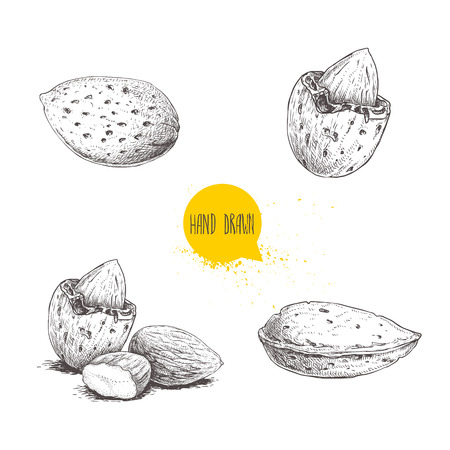 Illustration for Hand drawn sketch style almond set. Single, group  seeds and almond in nutshell. Organic food vector illustrations collection isolated on white background. - Royalty Free Image