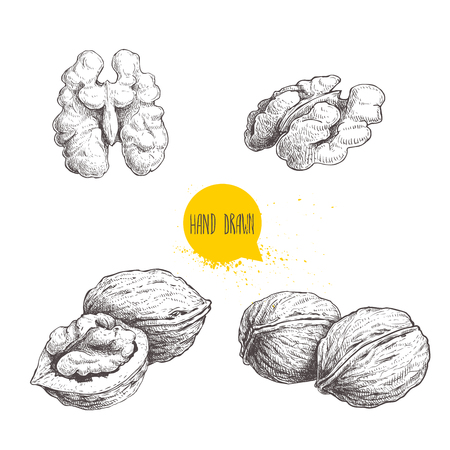 Illustration pour Hand drawn sketch style walnuts set.  Single whole, half and walnut seed. Eco healthy food vector illustration. Isolated on white background. Retro style. - image libre de droit