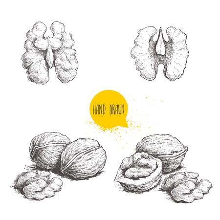 Ilustración de Hand drawn sketch style walnuts set.  Single whole, half and walnut seed. Eco healthy food vector illustration. Isolated on white background. Retro style. - Imagen libre de derechos