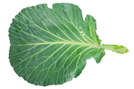 Photo pour Fresh green cabbage leaf - image libre de droit