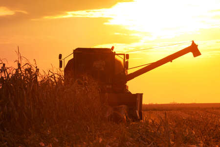 Foto de The Combine Operator Getting the Harvest of Corn on the Field of Corn at the Sunset on a Summer Evening - Imagen libre de derechos
