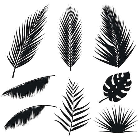 Illustration pour Vector tropical palm leaves silhouette set isolated on white background. Summer exotic flora. Jungle palm and monstera leaf. Illustration for your design. - image libre de droit