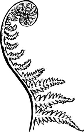 Illustration pour Black and white picture of a fractal leaf. Spiral fern - image libre de droit