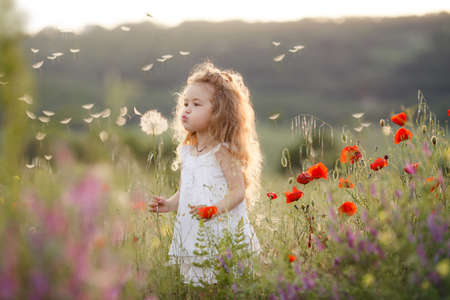 Foto de Cute baby girl in a flowery summer field. Little cute girl with thick long curly hair, dressed in a summer white dress, holding a large white dandelion, one plays in green field among bright flowers on a warm summer day. - Imagen libre de derechos