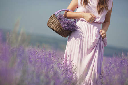 Foto de A slim young woman, dressed in a pink long dress, walking through a huge lilac blooming field of lavender collecting in a basket fragrant spring flowers and enjoying nature and a warm summer day. - Imagen libre de derechos