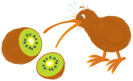 kiwi bird and kiwi fruit