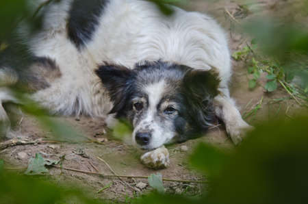 Sad homeless dog lying on the earth