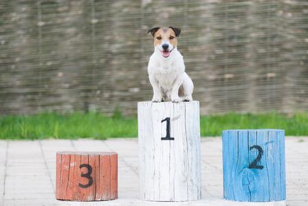 Foto de Champion dog on a pedestal at the first place - Imagen libre de derechos