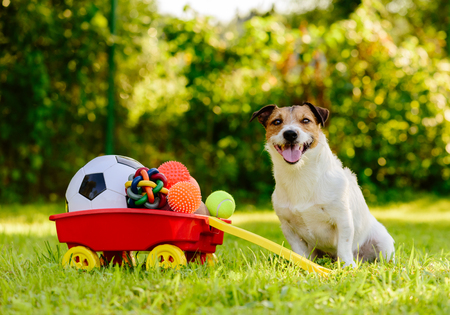 Foto de Happy dog ??sitting near wheelbarrow full of real treasures - various kinds of balls - Imagen libre de derechos