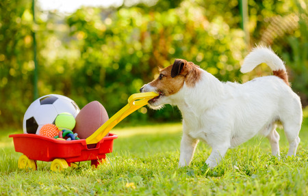 Photo pour Concept of fun summer activities with dog and many sport balls - image libre de droit