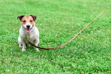 Photo pour Obedient dog and long-line training leash on green grass background - image libre de droit