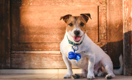 Photo pour Dog with container for doggy poop bags on collar - image libre de droit