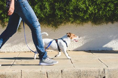 Photo for Dog walker walking at street pavement - Royalty Free Image