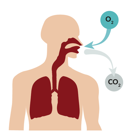 Illustration pour Breathing through the nose and exhaling through the mouth. Respiratory system - image libre de droit