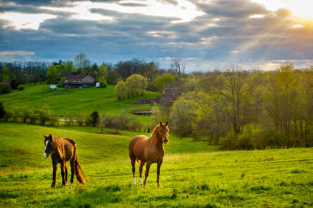 Photo pour Beautiful chestnut horses on a farm in Central Kentucky at sunset - image libre de droit