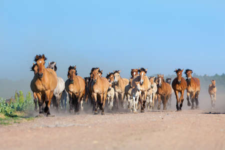 Herd of horses and foals runs on the road in summer