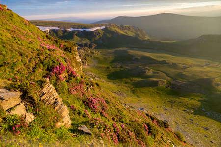Photo pour Summer sunrise landscape in the Carpathians Mountains, on Transalpina mountain road, Romania. Pink rhododendron flowers on summer mountain - image libre de droit