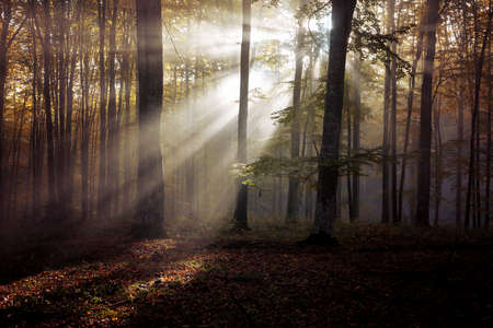Photo for Autumn landscape of a beautiful forest - Royalty Free Image