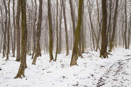 Photo for Winter landscape of the frozen forest - Royalty Free Image