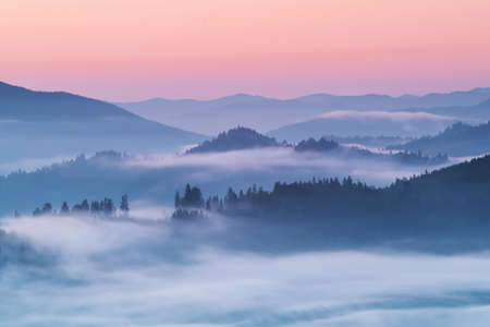 Photo for Summer foggy sunrise above the forest - Royalty Free Image