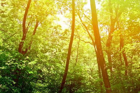 Foto de Beautiful green forest background - Imagen libre de derechos
