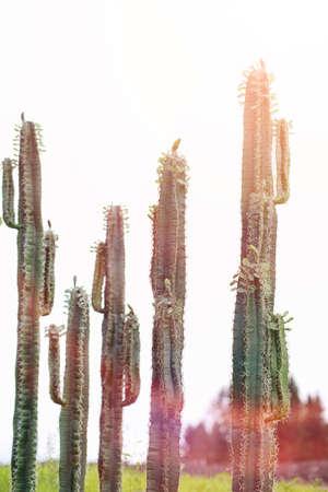 Foto de A tall cactus against the sky. Green cactus - Imagen libre de derechos