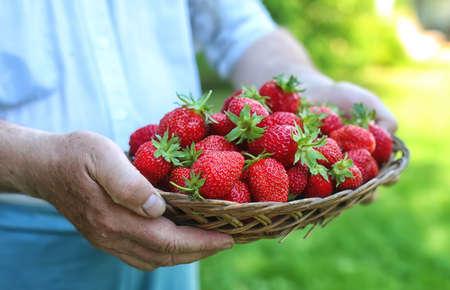 Foto de strawberries in his outstretched hand - Imagen libre de derechos