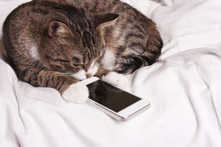 Photo pour smart cat looks into the phone - image libre de droit